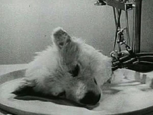 experiment1940
